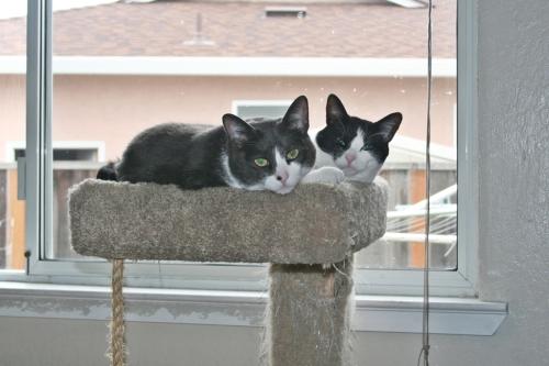 Boy cats