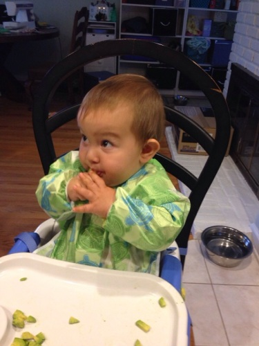 Baby avocado
