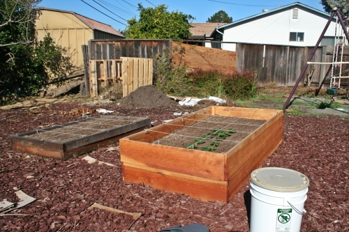 Garden and compost pile